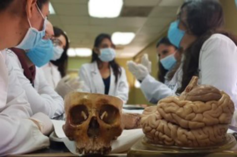 Conocen a fondo el funcionamiento del cerebro