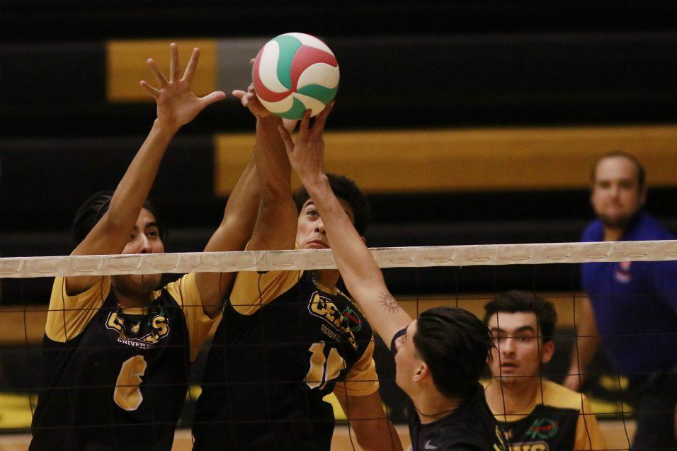 Zorros toman con calma su racha invicta en Voleibol CONADEIP