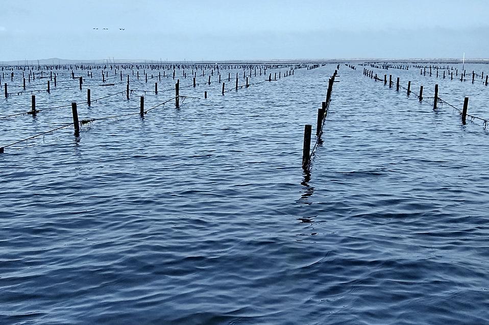 BC en condiciones de generar clúster marítimo que impulse la acuacultura de México